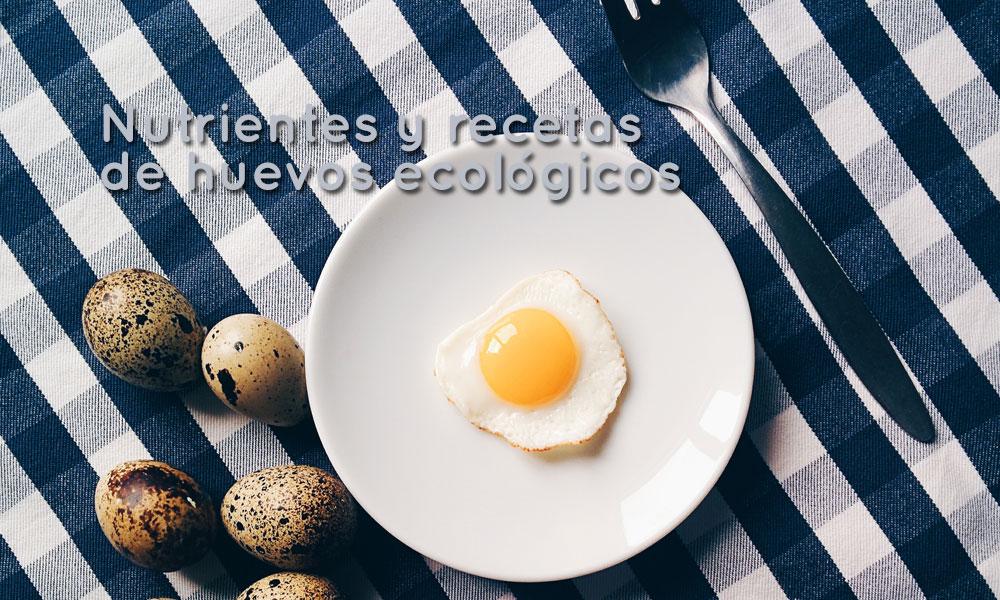 huevos ecologicos
