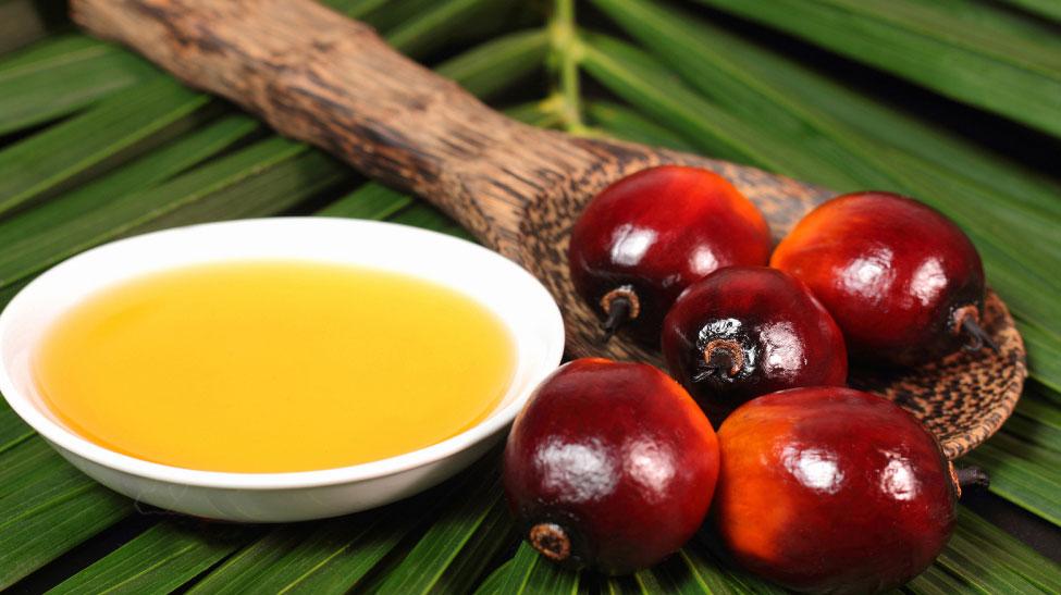 fruto de palma